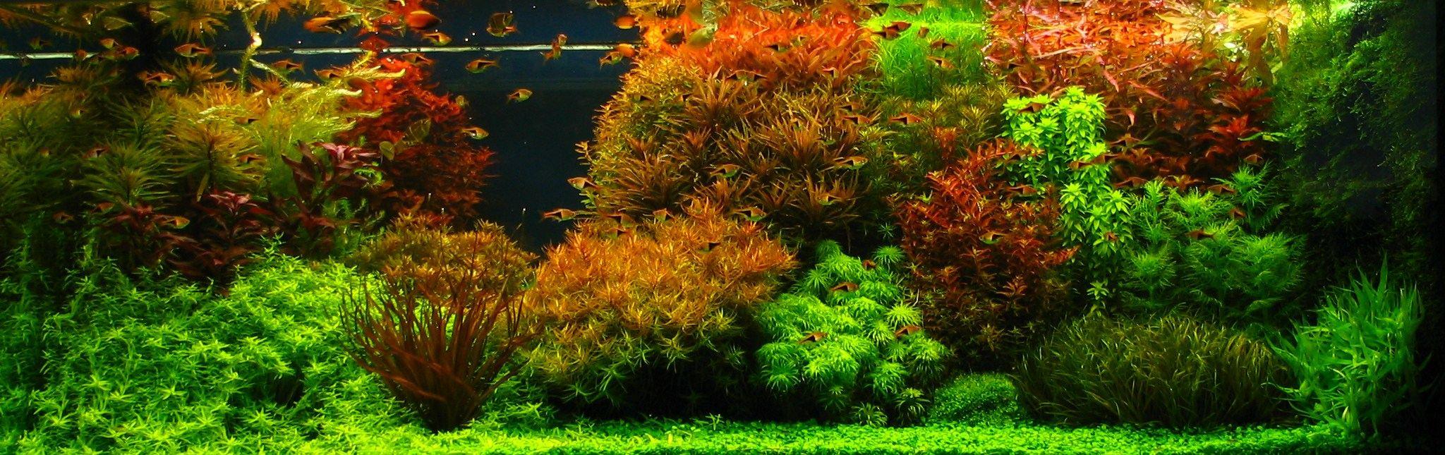 dutch aquarium