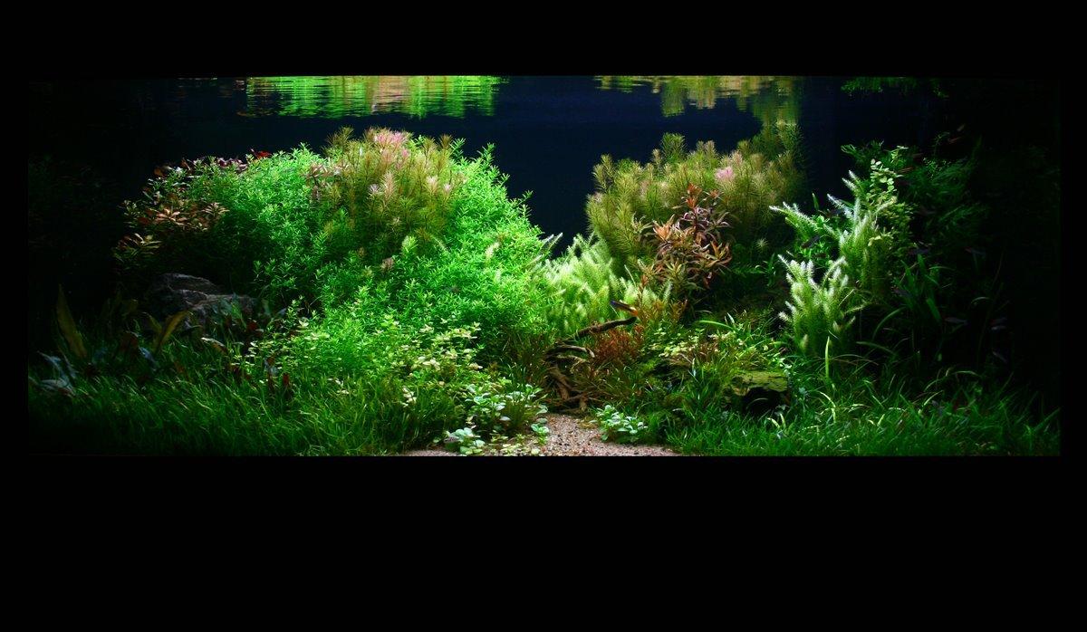 dutch aquarium 2