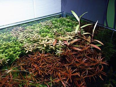 aquatic plants 2