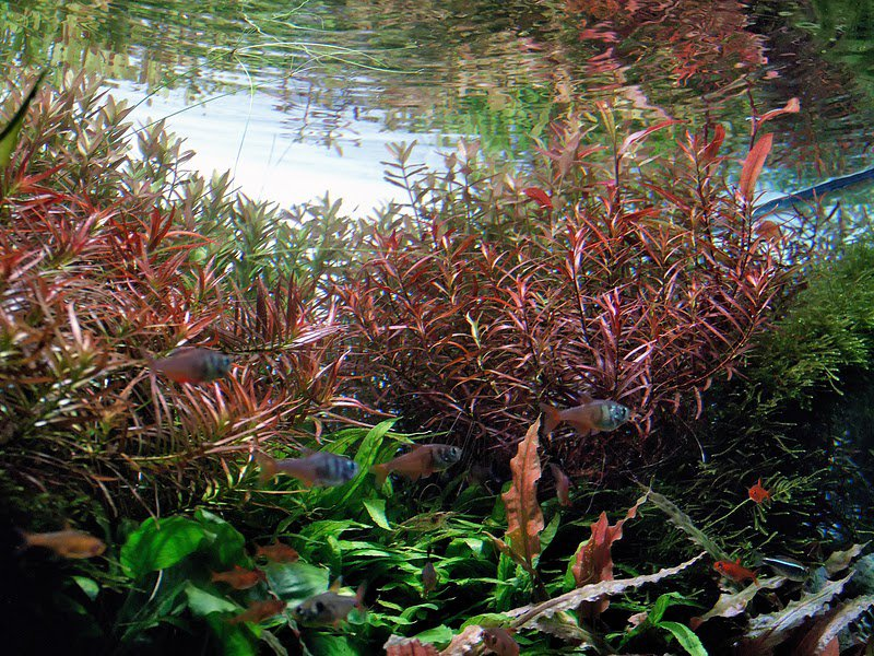 aquatic plants 3