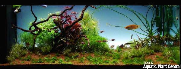 akvarium 4