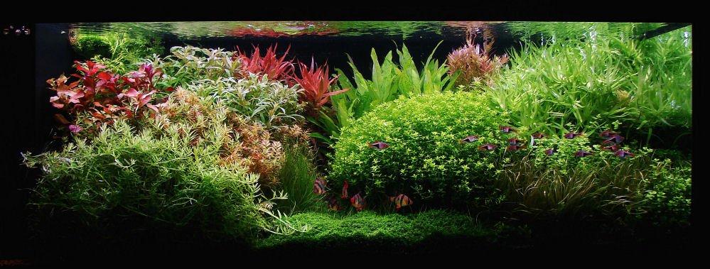 akvarium 3