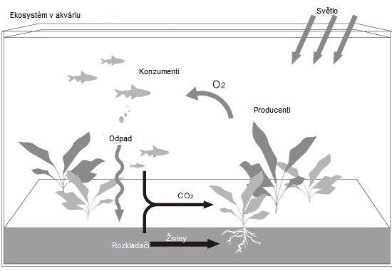 ekosystem v akvariu