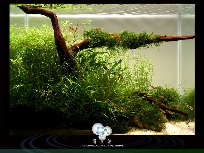 prirodni akvarium