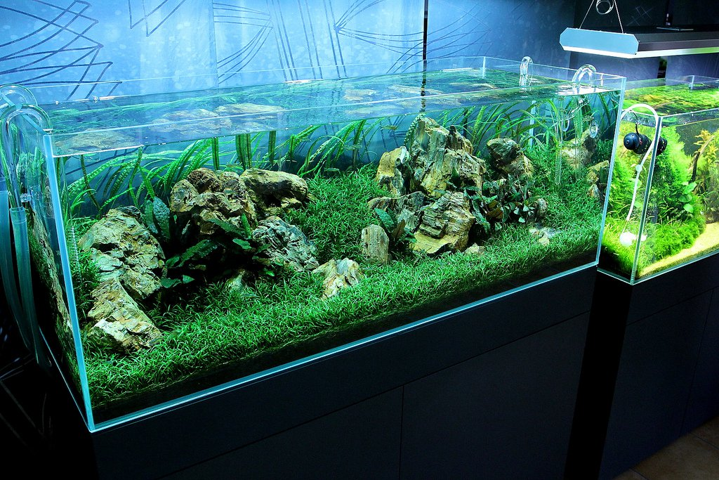 nature aquarium 10