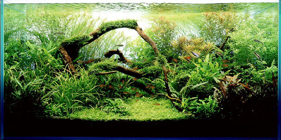 nature aquarium 1