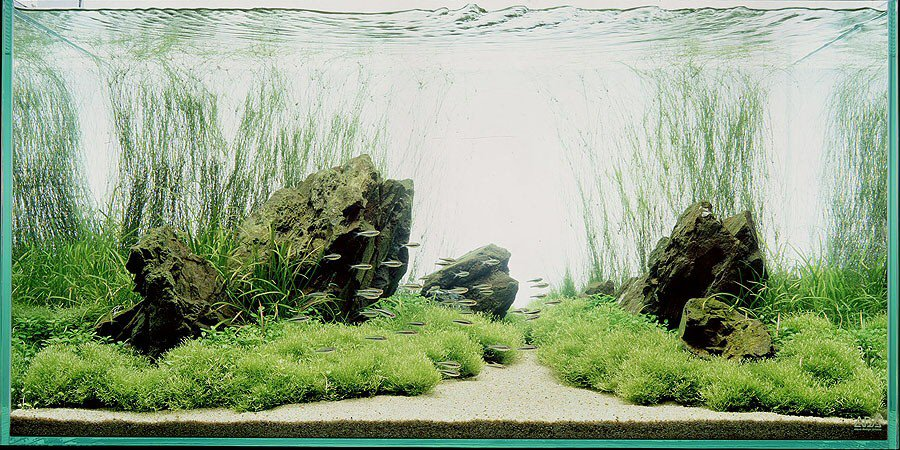 nature aquarium 2