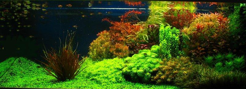 holandske akvarium 1