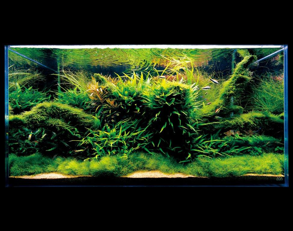 ada akvárium